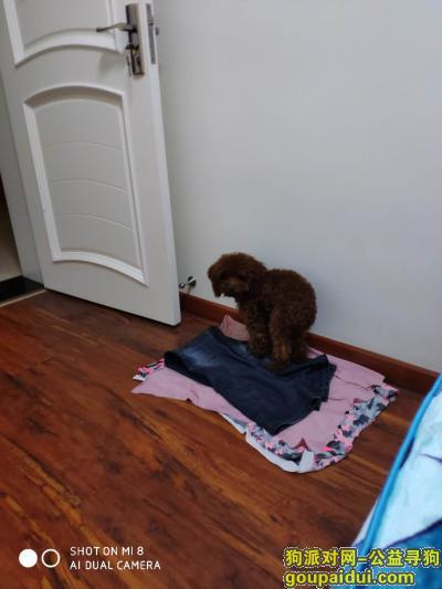温州捡到狗,蟠凤捡到的狗狗,它是一只非常可爱的宠物狗狗,希望它早日回家,不要变成流浪狗。
