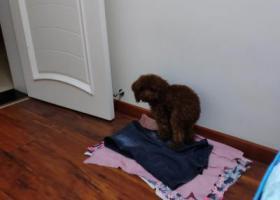 寻狗启示,蟠凤捡到的狗狗,它是一只非常可爱的宠物狗狗,希望它早日回家,不要变成流浪狗。