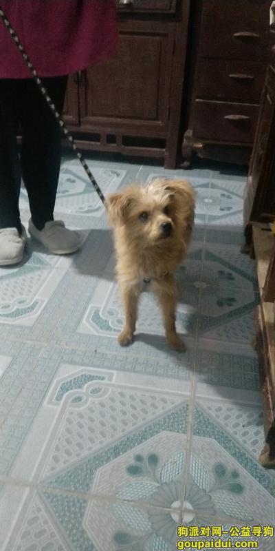 南通寻狗主人,一只泰迪,有一条黑包白色花纹的牵狗绳,它是一只非常可爱的宠物狗狗,希望它早日回家,不要变成流浪狗。