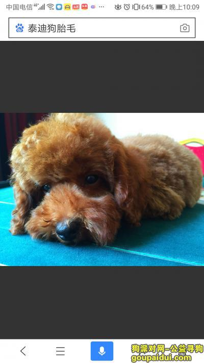 烟台寻狗启示,本人在招远丢失一只泰迪,如有发现,请联系我,重金感谢,它是一只非常可爱的宠物狗狗,希望它早日回家,不要变成流浪狗。