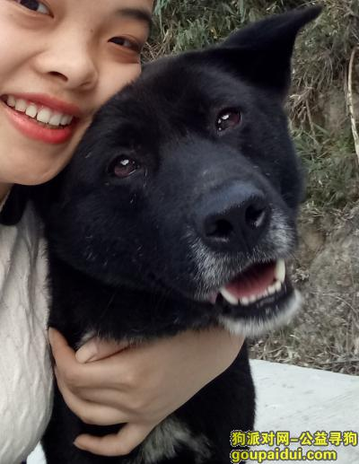 怀化寻狗,它名字叫小胖,走失了三天,请帮忙多观察一下,如有消息,请联系13297457169,拜托了 ,各位,它是一只非常可爱的宠物狗狗,希望它早日回家,不要变成流浪狗。