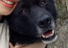 寻狗启示,它名字叫小胖,走失了三天,请帮忙多观察一下,如有消息,请联系13297457169,拜托了 ,各位,它是一只非常可爱的宠物狗狗,希望它早日回家,不要变成流浪狗。