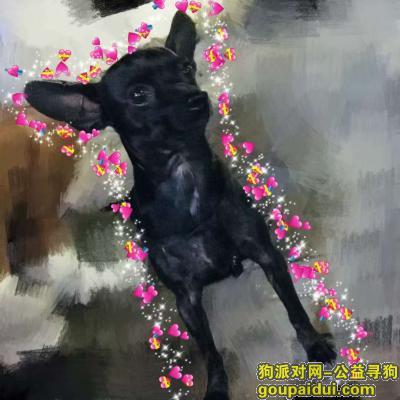 晋中寻狗启示,寻狗启示2.11清晨丢失狗狗 请大家看到速度联系我 必有重谢:18203448490,它是一只非常可爱的宠物狗狗,希望它早日回家,不要变成流浪狗。