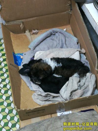 泸州找狗,狗狗在2月12日晚上五点于泸州党政大楼附近走丢,它是一只非常可爱的宠物狗狗,希望它早日回家,不要变成流浪狗。