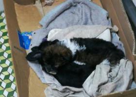 狗狗在2月12日晚上五点于泸州党政大楼附近走丢