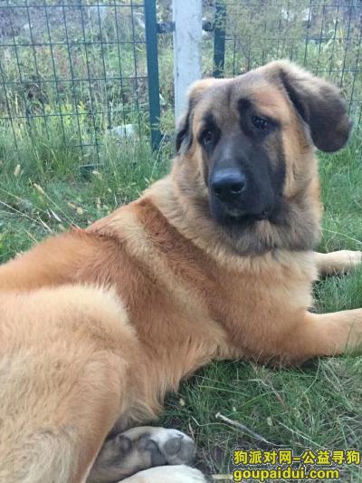 吉林寻狗启示,吉林市龙潭山附近寻狗,它是一只非常可爱的宠物狗狗,希望它早日回家,不要变成流浪狗。