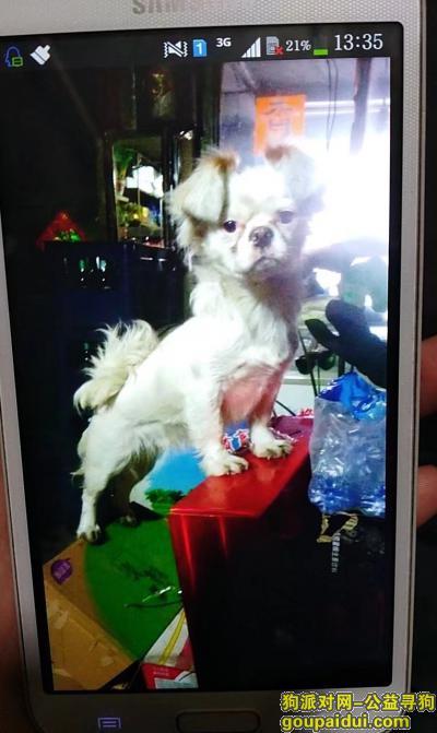 吉林丢狗,吉林市急寻母狗丫头,快两岁,全身白色耳朵跟黄色,它是一只非常可爱的宠物狗狗,希望它早日回家,不要变成流浪狗。