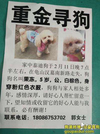 寻狗启示,千元寻狗,狗狗有癫痫,需要长期吃药,希望好心人提供线索,它是一只非常可爱的宠物狗狗,希望它早日回家,不要变成流浪狗。