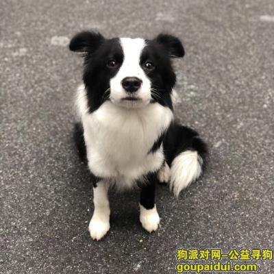 衡阳寻狗,寻找爱狗凯伦,必有重谢,它是一只非常可爱的宠物狗狗,希望它早日回家,不要变成流浪狗。