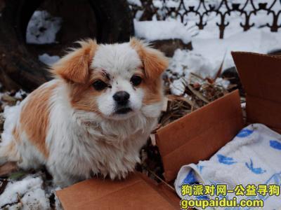 郑州捡到狗,在郑州经开区第四大街与经南三路附近看到一只貌似走失的流浪狗,因为长得很可爱毛发也还挺干净的!,它是一只非常可爱的宠物狗狗,希望它早日回家,不要变成流浪狗。