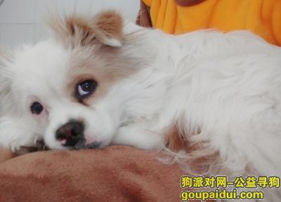 德宏寻狗网,拜托大家,帮忙找找我家人,它是一只非常可爱的宠物狗狗,希望它早日回家,不要变成流浪狗。