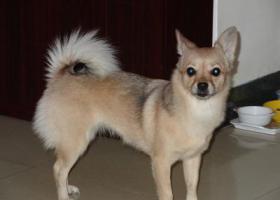 寻狗启示,广州天河区华师地铁站附近2019年2月12日中午12时左右走失,它是一只非常可爱的宠物狗狗,希望它早日回家,不要变成流浪狗。