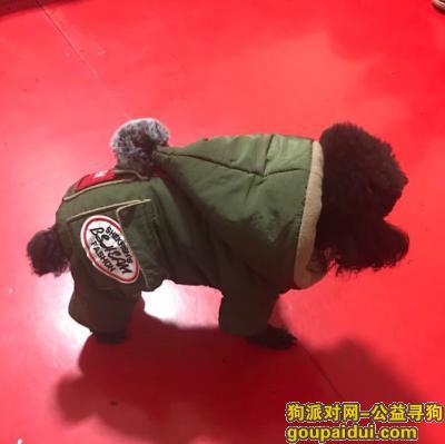 抚顺寻狗启示,寻找黑色泰迪 有重谢,它是一只非常可爱的宠物狗狗,希望它早日回家,不要变成流浪狗。