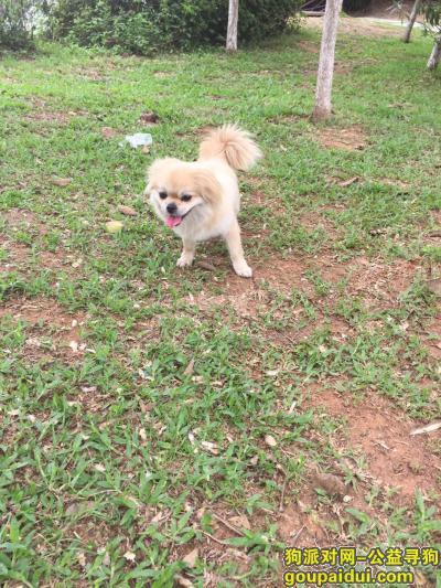 宜昌找狗,寻狗,坐标湖北省枝江市顾家店镇同济垸村,它是一只非常可爱的宠物狗狗,希望它早日回家,不要变成流浪狗。