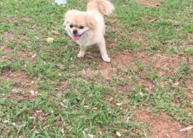 寻狗启示,寻狗,坐标湖北省枝江市顾家店镇同济垸村,它是一只非常可爱的宠物狗狗,希望它早日回家,不要变成流浪狗。