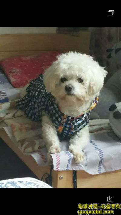 连云港找狗,连云港市东海县桃林镇苗蛤庄村,它是一只非常可爱的宠物狗狗,希望它早日回家,不要变成流浪狗。