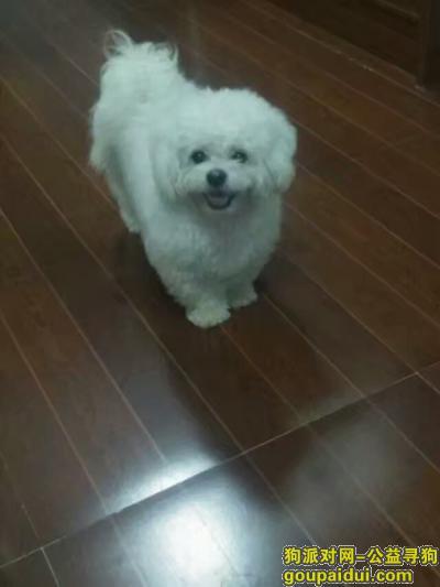 连云港丢狗,找狗,比熊串串白色的母狗,5岁了叫汤圆。在东海县桃林镇苗蛤庄走丢,它是一只非常可爱的宠物狗狗,希望它早日回家,不要变成流浪狗。