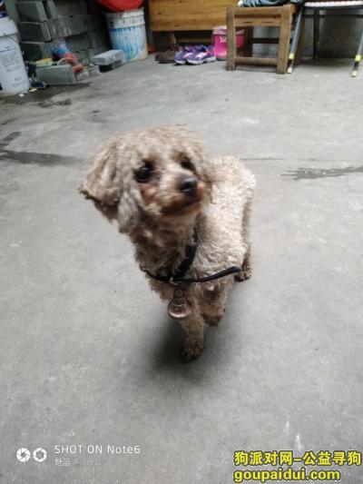 黄冈捡到狗,请狗的主人快点将狗带回,天气很冷。,它是一只非常可爱的宠物狗狗,希望它早日回家,不要变成流浪狗。