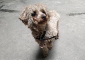 请狗的主人快点将狗带回,天气很冷。