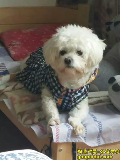 连云港寻狗启示,找狗。白色比熊串串,母狗,5岁在东海县桃林镇苗蛤庄走丢,它是一只非常可爱的宠物狗狗,希望它早日回家,不要变成流浪狗。