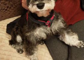 寻狗启示,请狗主人看到后和我联系,它是一只非常可爱的宠物狗狗,希望它早日回家,不要变成流浪狗。