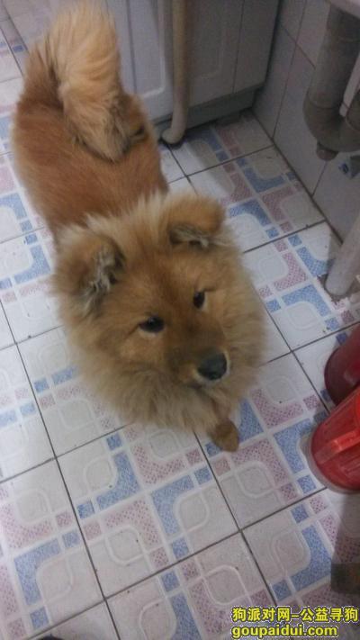 连云港丢狗,连云港狗狗走丢 北小区附近,它是一只非常可爱的宠物狗狗,希望它早日回家,不要变成流浪狗。