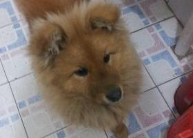 寻狗启示,连云港狗狗走丢 北小区附近,它是一只非常可爱的宠物狗狗,希望它早日回家,不要变成流浪狗。