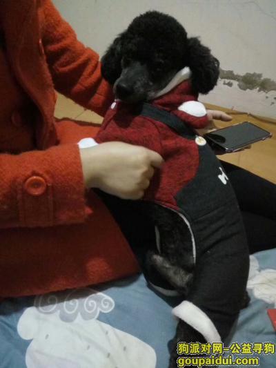 寻狗启示,黑豆快回家!我们想你!,它是一只非常可爱的宠物狗狗,希望它早日回家,不要变成流浪狗。