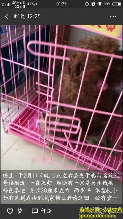 寻狗启示,寻棕色母泰迪 天生后腿有一只残疾,它是一只非常可爱的宠物狗狗,希望它早日回家,不要变成流浪狗。