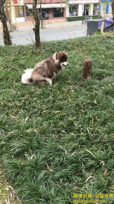 达州寻狗网,我好想它 求求大家留意一下 我很害怕 怕它现在过的不好 都不敢往坏的地方想,它是一只非常可爱的宠物狗狗,希望它早日回家,不要变成流浪狗。