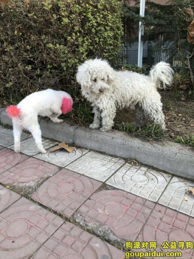,年30在桥南捡他,放走他跟着回来了,也不知道是谁家的爱狗,它是一只非常可爱的宠物狗狗,希望它早日回家,不要变成流浪狗。