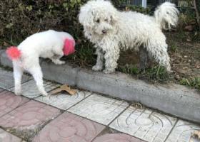 寻狗启示,年30在桥南捡他,放走他跟着回来了,也不知道是谁家的爱狗,它是一只非常可爱的宠物狗狗,希望它早日回家,不要变成流浪狗。