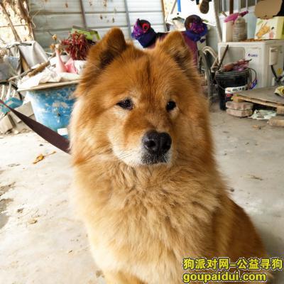 郑州寻狗主人,19年2月19日晚上8点捡到的狗狗,它是一只非常可爱的宠物狗狗,希望它早日回家,不要变成流浪狗。