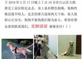 寻狗启示,广州寻找爱犬 名叫布丁,它是一只非常可爱的宠物狗狗,希望它早日回家,不要变成流浪狗。