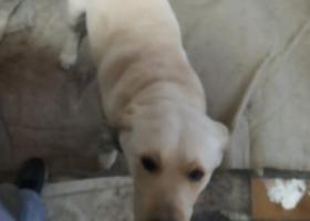 寻狗启示,2019年,2月19日下午六点半,它是一只非常可爱的宠物狗狗,希望它早日回家,不要变成流浪狗。