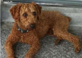 寻狗启示,北仑北仑大碶金家村寻狗启示,它是一只非常可爱的宠物狗狗,希望它早日回家,不要变成流浪狗。
