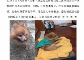 寻狗启示,寻找黄颜色狐狸犬 公狗,它是一只非常可爱的宠物狗狗,希望它早日回家,不要变成流浪狗。
