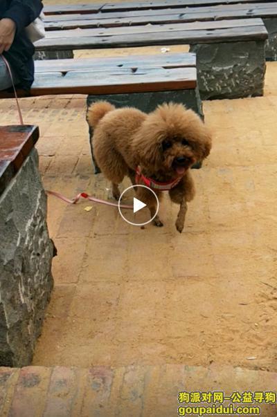 ,陪伴三年的狗狗,于2月22号在吴川大位村老家中偷跑出去至今未归,望看到的朋友们能联系我,它是一只非常可爱的宠物狗狗,希望它早日回家,不要变成流浪狗。