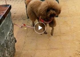 寻狗启示,陪伴三年的狗狗,于2月22号在吴川大位村老家中偷跑出去至今未归,望看到的朋友们能联系我,它是一只非常可爱的宠物狗狗,希望它早日回家,不要变成流浪狗。