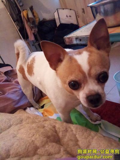 资阳寻狗网,有捡到的,请马上联系我,它是一只非常可爱的宠物狗狗,希望它早日回家,不要变成流浪狗。