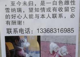 寻狗启示,重金寻狗 走失于重庆市冉家坝龙脊广场附近,它是一只非常可爱的宠物狗狗,希望它早日回家,不要变成流浪狗。