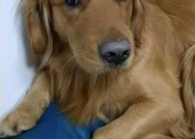 寻狗启示,酬谢金一万!2月14晚上7点走失于浦东凌桥菜场附近,它是一只非常可爱的宠物狗狗,希望它早日回家,不要变成流浪狗。