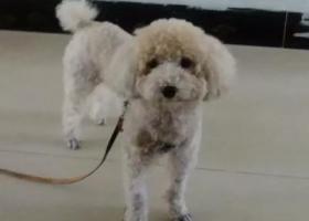 寻狗启示,23号下午,江宁中医院对面公园走丢一只狗狗,求帮忙,它是一只非常可爱的宠物狗狗,希望它早日回家,不要变成流浪狗。