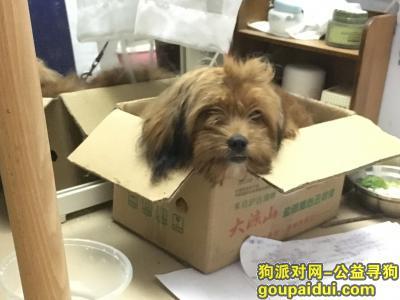 ,2月23日中山南区拾得泰迪一只,它是一只非常可爱的宠物狗狗,希望它早日回家,不要变成流浪狗。