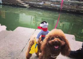 寻狗启示,上海闵行区杨虹路申虹路酬谢两千元寻找泰迪,它是一只非常可爱的宠物狗狗,希望它早日回家,不要变成流浪狗。