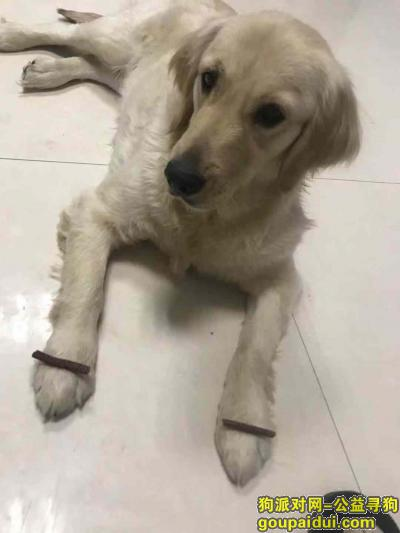 运城寻狗启示,河津地区,如果有找到狗狗的,请尽快与我们联系,主人爱狗心切,它是一只非常可爱的宠物狗狗,希望它早日回家,不要变成流浪狗。