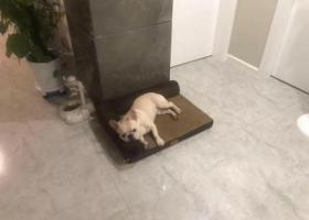 寻狗启示,深圳市福田区百花三路南天一花园酬谢五千元寻找法斗,它是一只非常可爱的宠物狗狗,希望它早日回家,不要变成流浪狗。