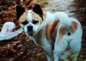 寻狗启示,自家宠物狗丢失,求帮忙,重酬5000!,它是一只非常可爱的宠物狗狗,希望它早日回家,不要变成流浪狗。