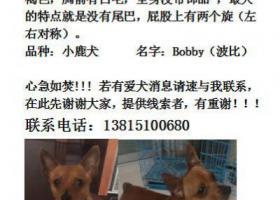 寻狗启示,家有一爱犬于2月24日在无锡皮革城附近不慎走失,它是一只非常可爱的宠物狗狗,希望它早日回家,不要变成流浪狗。