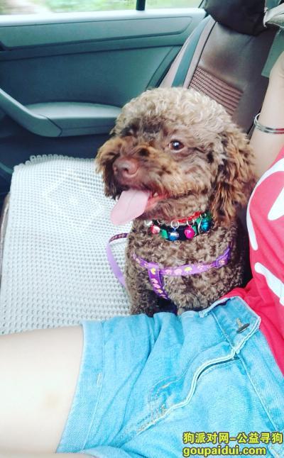 宜宾找狗,四川宜宾高县庆符镇寻狗启示,它是一只非常可爱的宠物狗狗,希望它早日回家,不要变成流浪狗。